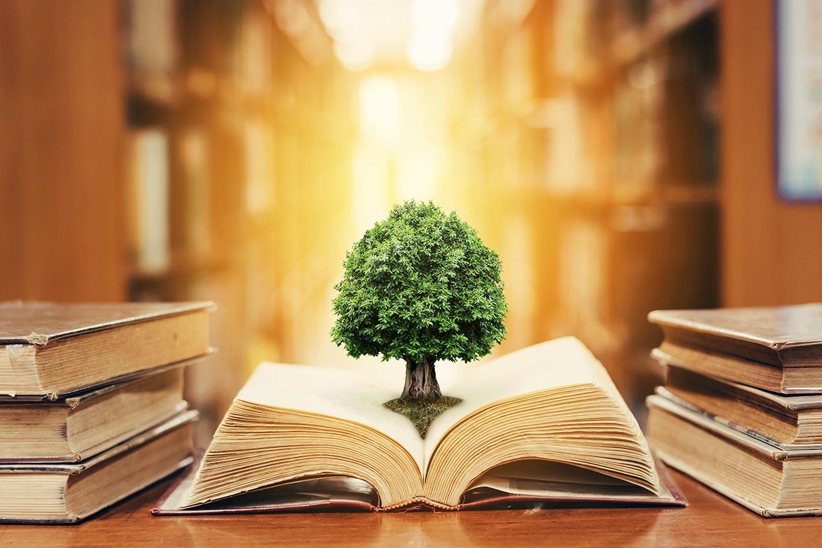 Bild eines Baumes der aus einem Buch wächst, als Sinnbild für die Wissensdatenbank zum Thema Nachhaltigkeit retopedia.
